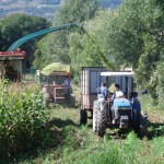 cgea_ensilage