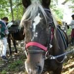 equi_cheval