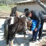 sap_equitation